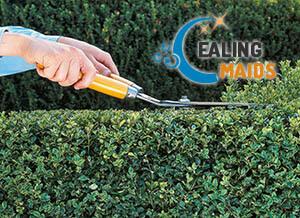 Trimming Hedges Ealing